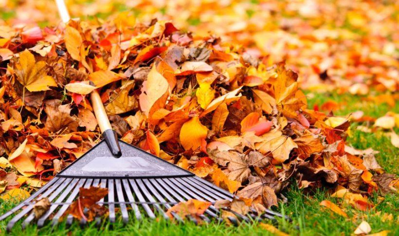 Rateau et feuilles mortes