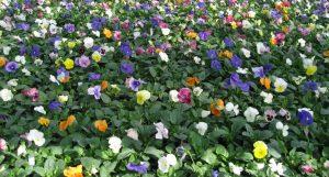 Fleurs de toutes les couleurs