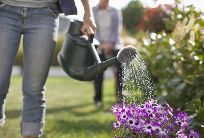 Jardinage plantes fleurs