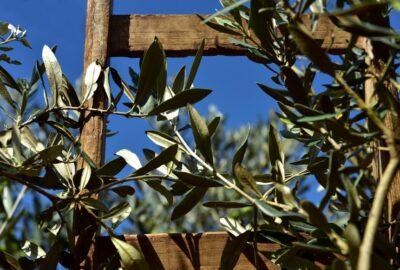 olivier rameau echelle bois